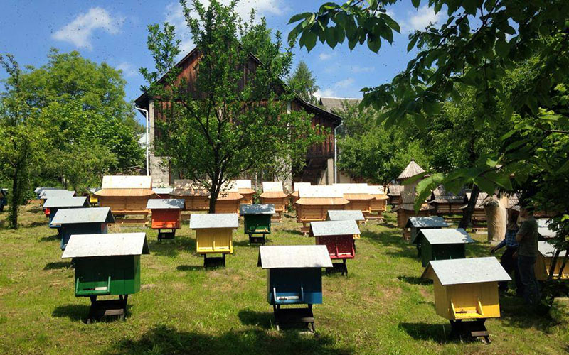 Hilltop Honey hives in Poland