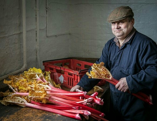 Yorkshire Rhubarb : world famous and made in the dark
