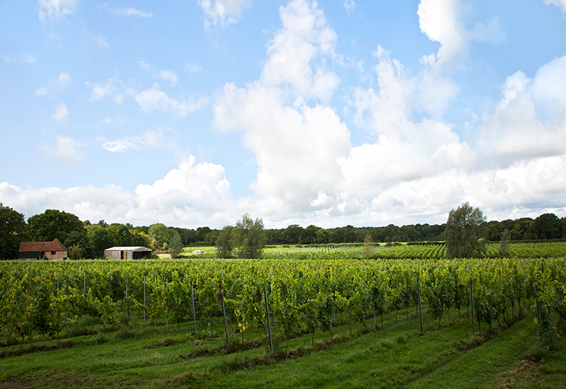 oxney vineyard