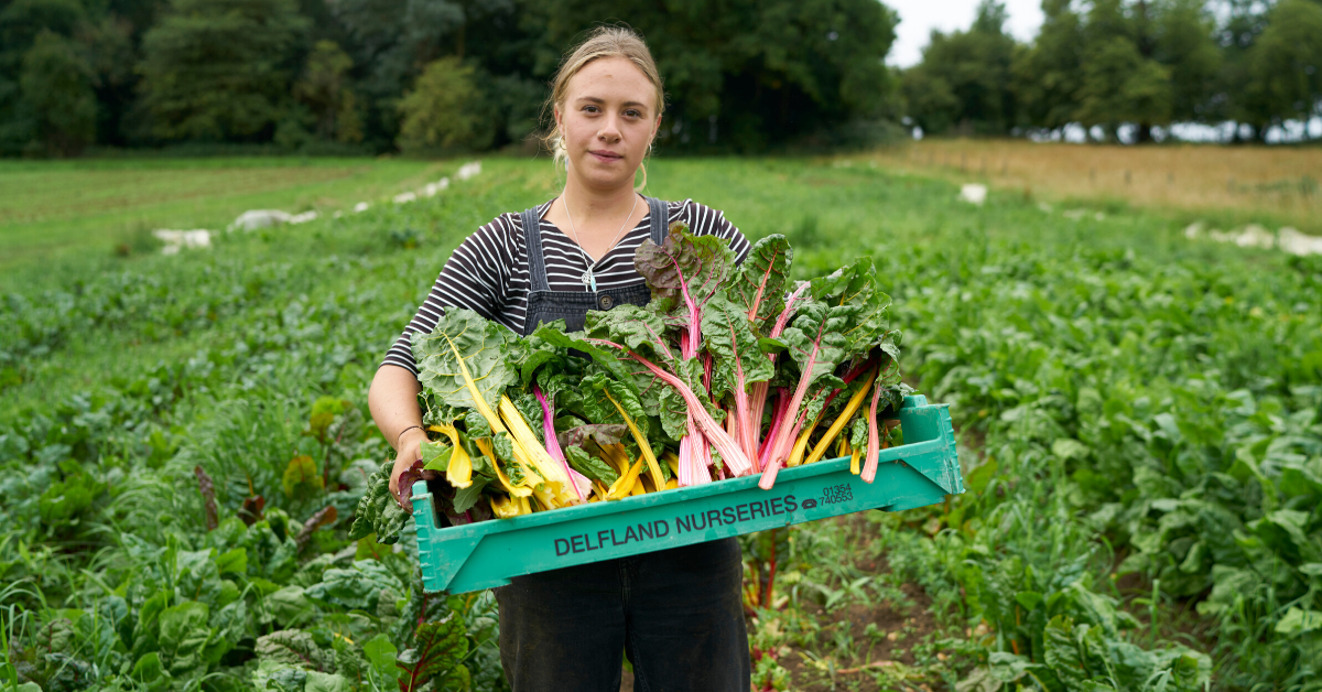 Picture of freshly picked organic vegetables on a UK farm.